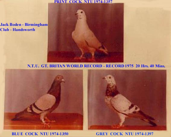 Type_Boden-record-birds